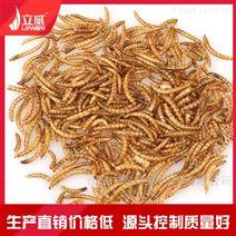 微波黄粉虫烘干设备厂家