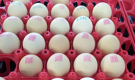 鸡蛋产业加快调整升级 企业如何提升蛋品品质?