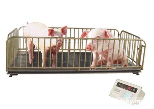 保定1吨电子地磅,2吨动物地磅价格