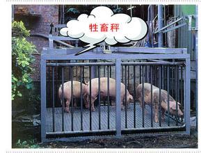 2吨称猪地磅,称猪地上衡